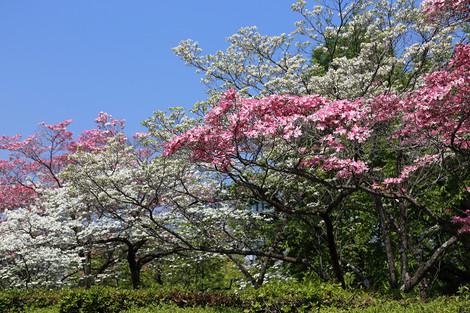 Kyotofuritusougousiryoukan1504203