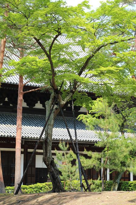 Syoukokuji1504302