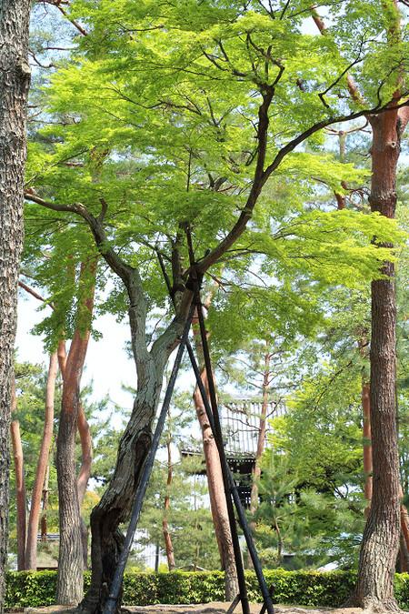 Syoukokuji1504305