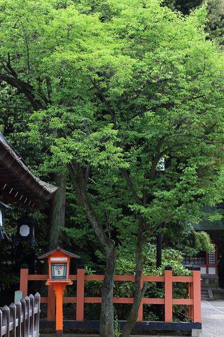 Yasakajinjya1505143
