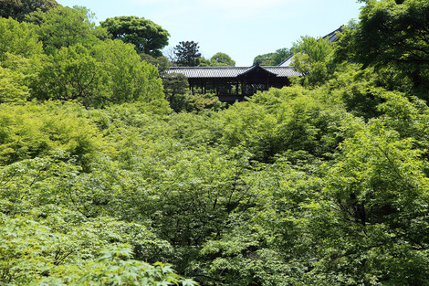 Toufukuji1505201