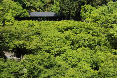 Toufukuji1505202