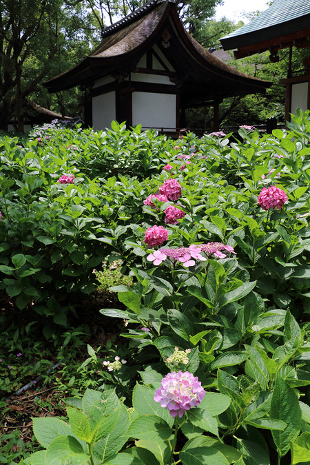 Fujinomorijinjya1506223