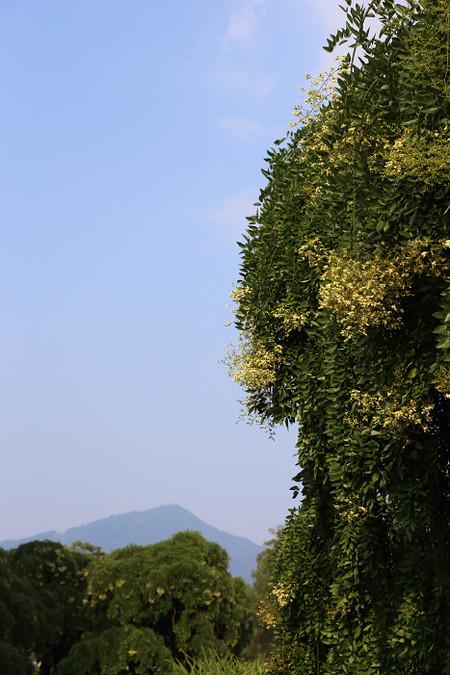 Kyotofuritusyokubutuen1508073