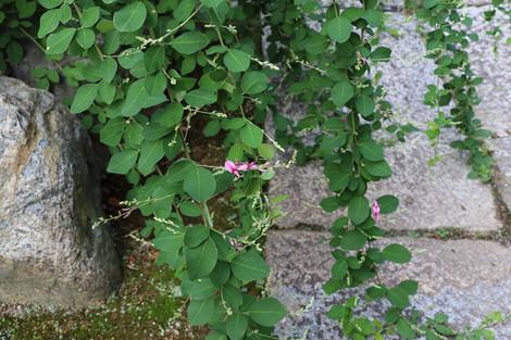Sainokaminoyasiro1509112