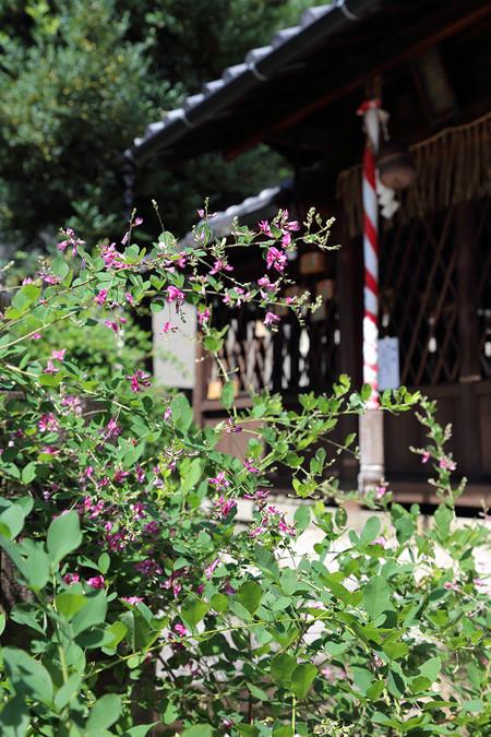 Sainokaminoyasiro1509161