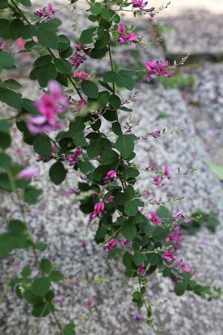 Sainokaminoyasiro1509163