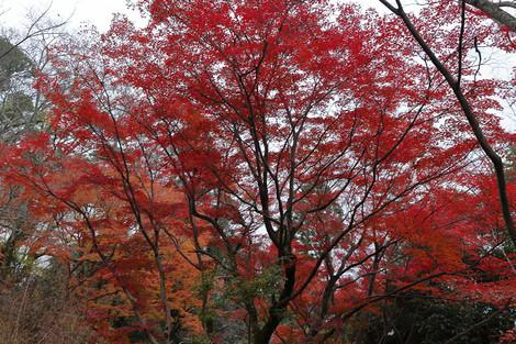 Maruyamakouen1512133