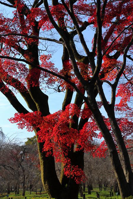 Kyotofuritusyokubutuen1512153