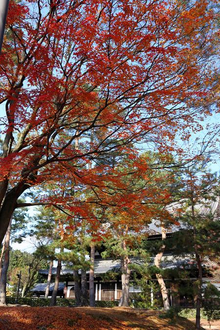 Syoukokuji1512176
