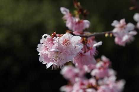 Kyotofuritusyokubutuen16033155