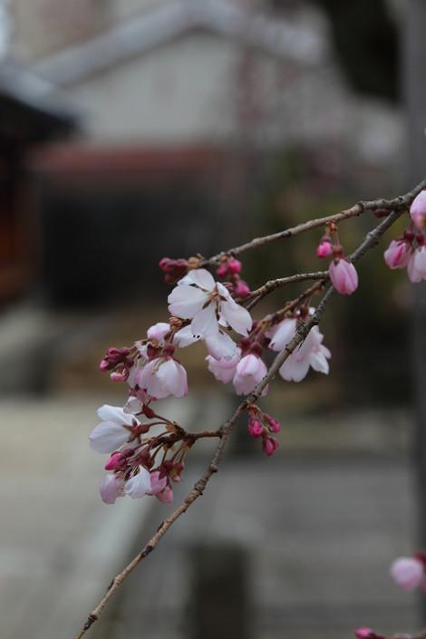 Myoukakuji1603283