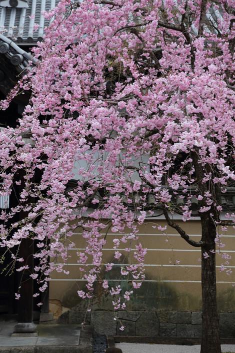 Myoukenji1604071