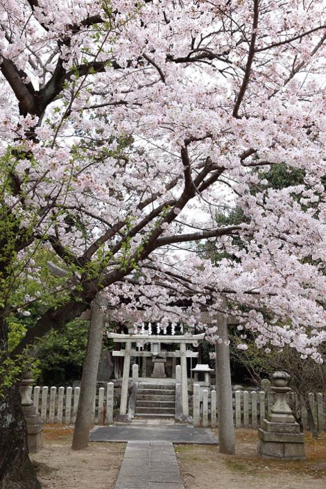 Myoukenji1604076