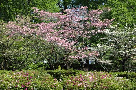 Kyotofuritusougousiryoukan1604255