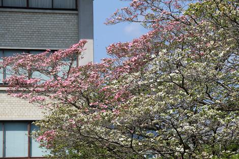 Kyotofuritusougousiryoukan1604256