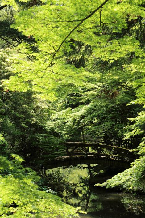 Kyotofuritusyokubutuen1604265