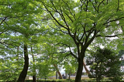 Syoukokuji1604302