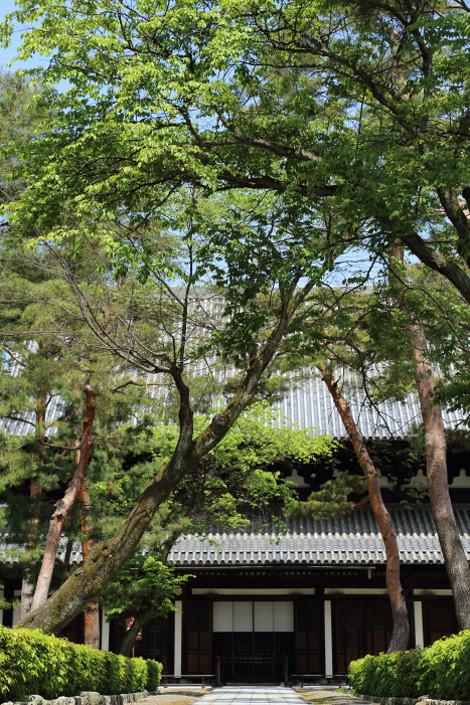 Syoukokuji1604306