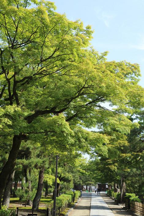 Kenninji1605091