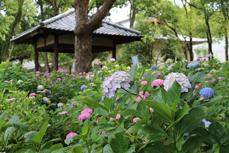 Fujinomorijinjya1606132