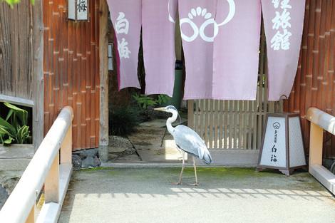 Gionsirakawa1606166