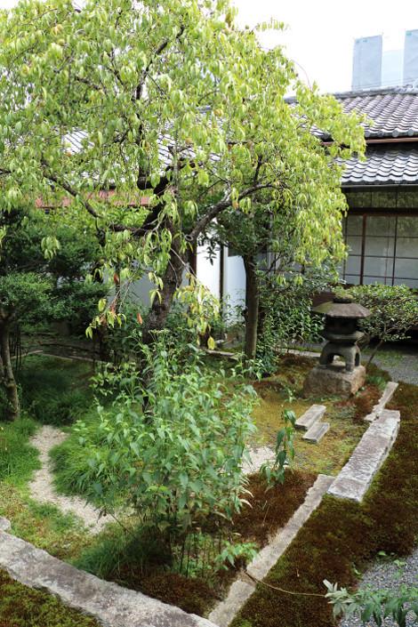 Arisukan109035