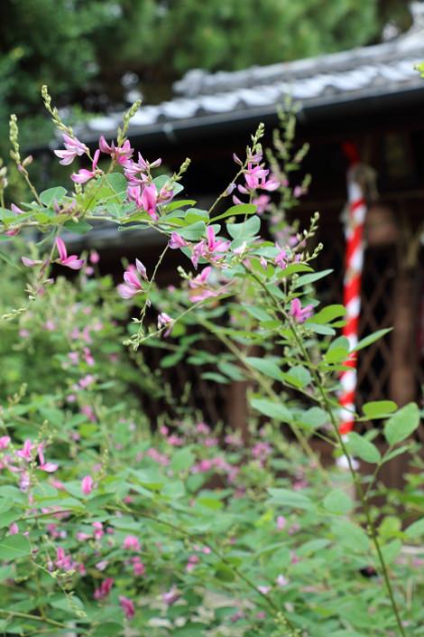 Sainokaminoyasiro1609231