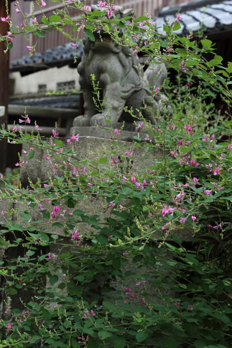 Sainokaminoyasiro1609232