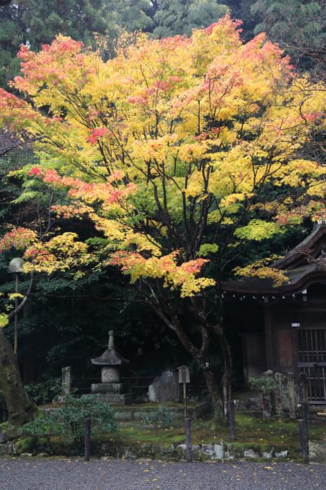 Sennyuji1611226
