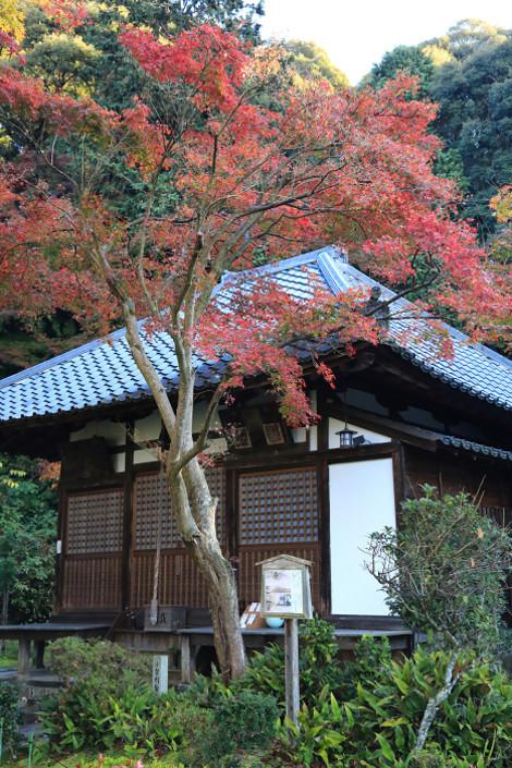 Seikanji1611303