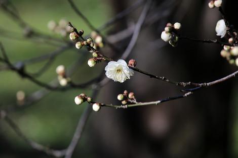 Kyotofuritusyokubutuen1701115