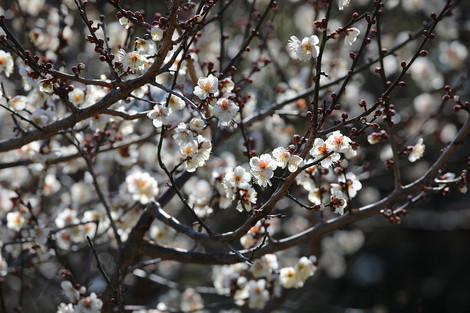 Kyotogyoen1702036