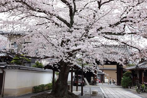 Honryuji1702121