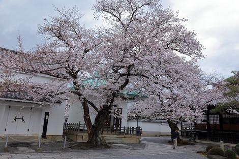 Honryuji1702123