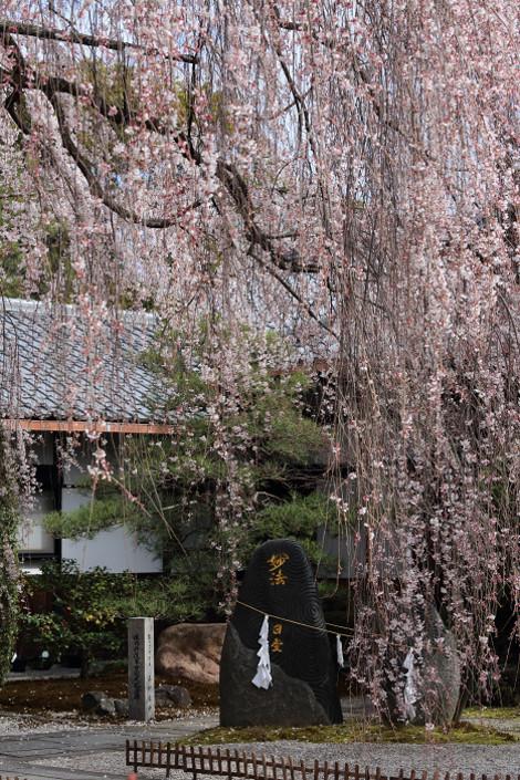 Honmanji1702252