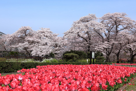 Kyotofuritusyokubutuen1702181