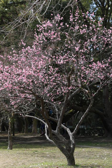 Kyotogyoen1703031