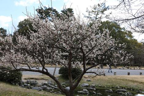Kyotogyoen1703033
