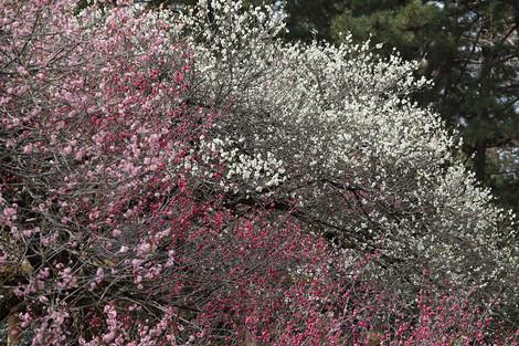 Kyotofuritusykubutuen1703232