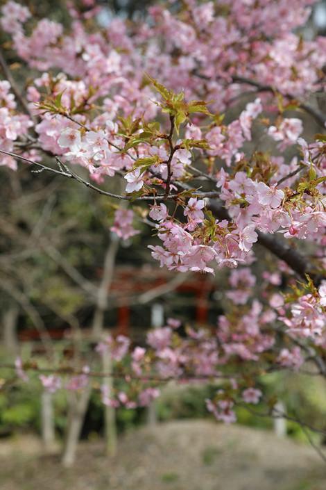 Kyotofuritusykubutuen1703233