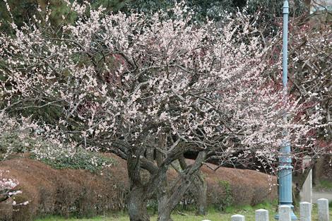 Kyotogyoen1703263