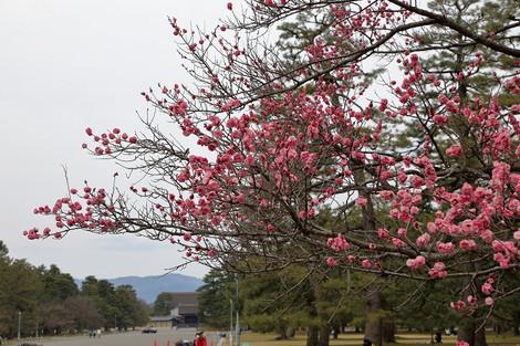 Kyotogyoen1703266