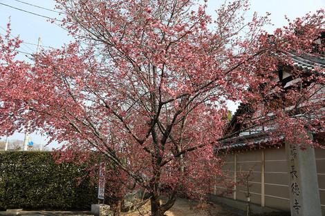 Tyoutokujii1703201