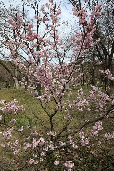 Kyotofuritusyokubutuen1703311