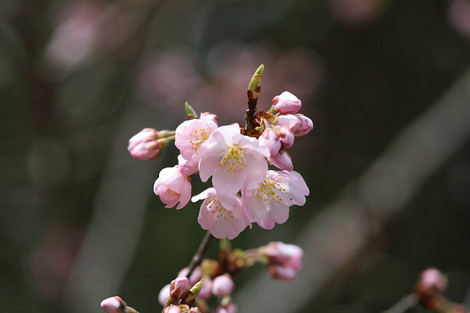 Kyotofuritusyokubutuen1703313