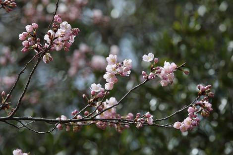 Kyotofuritusyokubutuen1703315