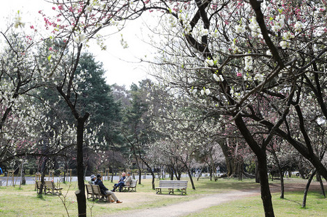 Kyotogyoen1703271