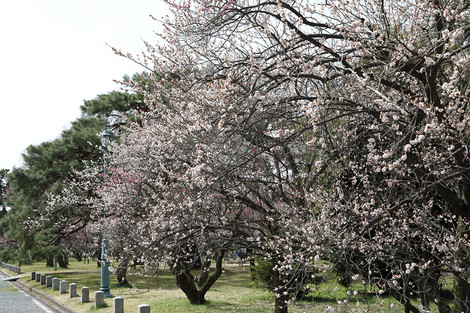 Kyotogyoen1703283