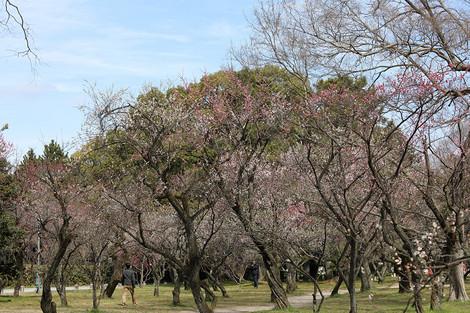 Kyotogyoen1703285